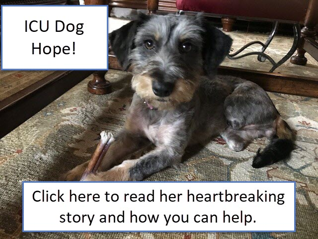 ICU Dog Hope